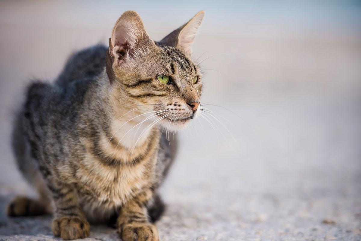 emergency cat image
